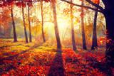 Autumn. Fall. Autumnal trees in sun rays