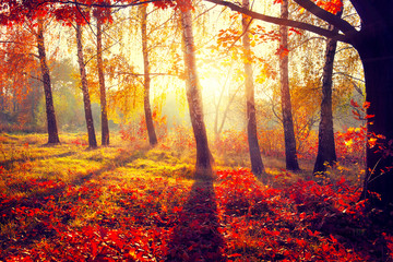 Autumn. Fall. Autumnal trees in sun rays