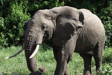 animales de tanzania