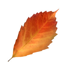 Herbst - Blatt
