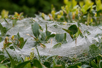 nice dew drops