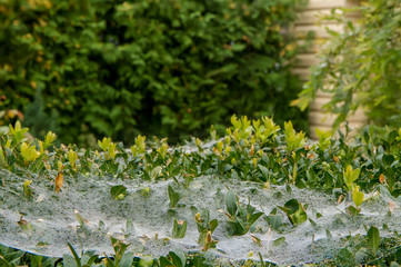 autumn cobweb macro