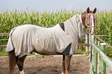 Pferd mit Ekzemer Decke