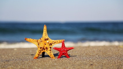 Big and small starfish on the beach