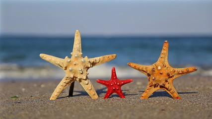 Family starfish