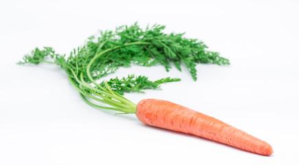 Carrots 7