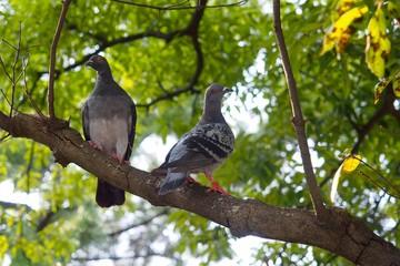枝にとまる2匹の鳩