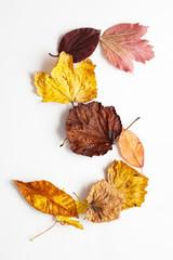 Buchstabe S in Herbstblätter