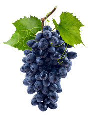 Blue grapes bunch isolated on white background