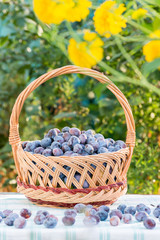 Ripe plums in basket  on natural background