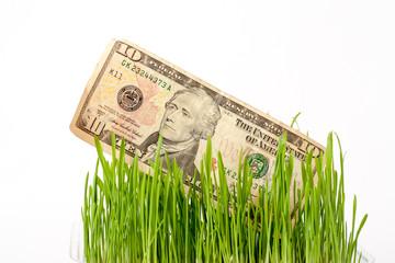 Growing dollars. The vegetation of dollar bills on the green