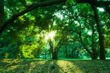 森林 - 70759720