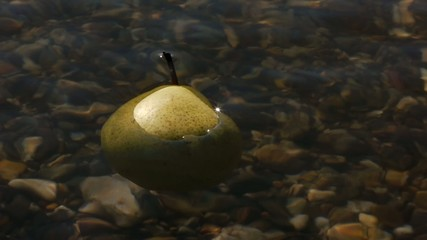 Stock Video Footage Pear in the river water
