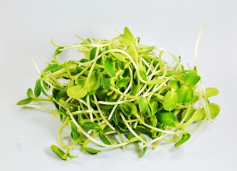 sunflower sprouts on white background