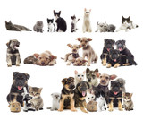 set of puppies and kittens - 70760787