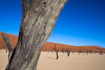 Namibia, deserto con alberi
