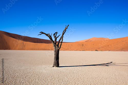 Poster Namibia, deserto con alberi