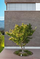 house outdoor, tree