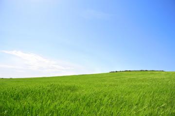 Prato verde con cielo azzurro - pianeta verde