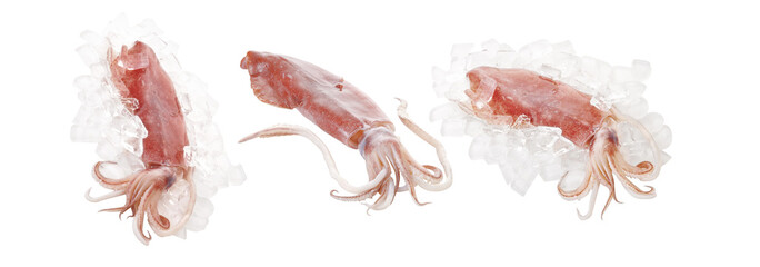 squid and ice on white background