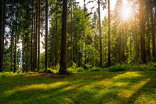 """Постер, картина, фотообои """"forest glade in  shade of the trees in sunlight"""""""