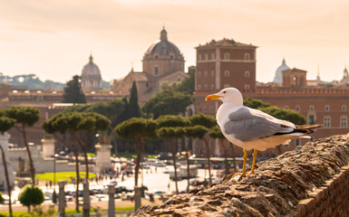 Seagull sitting on the ruins of Trajan's Market in Rome at sunse