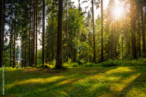 Foto op Aluminium Bossen forest glade in shade of the trees in sunlight