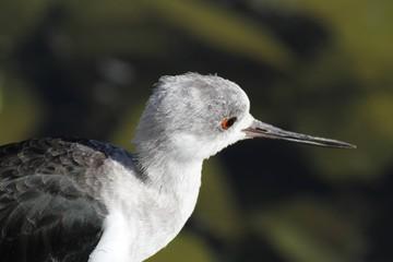 Portrait d'oiseau
