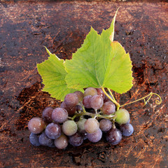 Concord grape with wine leaves on brown background
