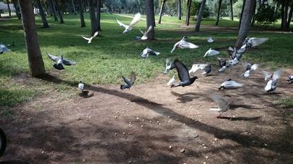 Palomas alzando el vuelo
