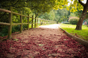 viale, autunno, foglie, romantico