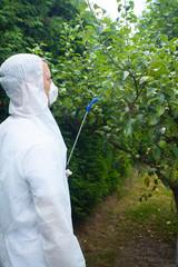 Gardener spraying fruit trees