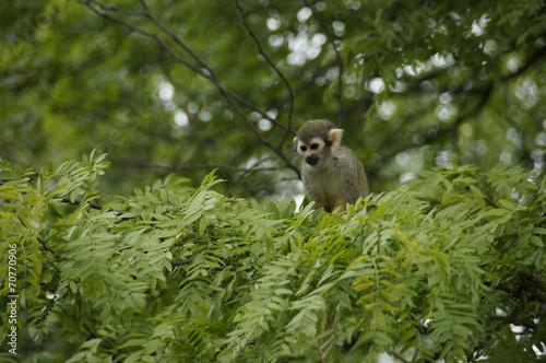 canvas print picture Affe im Dschungel