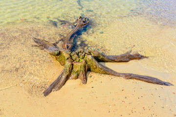 old stump on the shore of sea