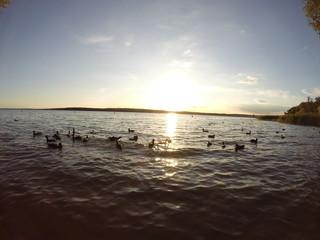 Sonnenuntergang am See mit Enten