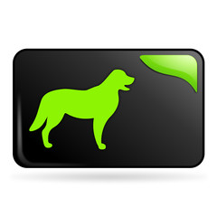 chien sur bouton web rectangle vert