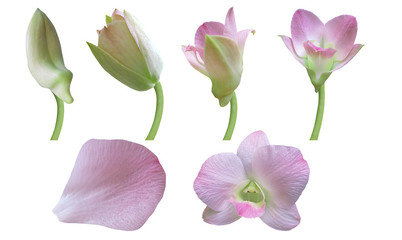 Orchid flower -Stages of growth