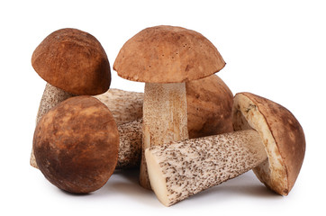 The brown cap boletus isolated on white background