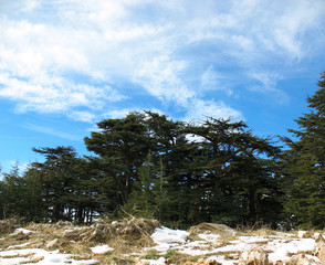 Cedars of the Lord, Lebanon