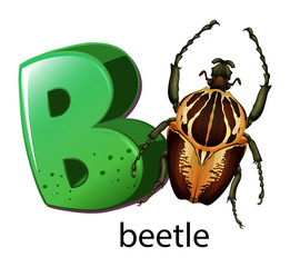 A letter B for beetle