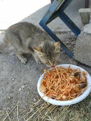 Il gatto con gli spaghetti