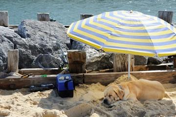 un chien à la pêche