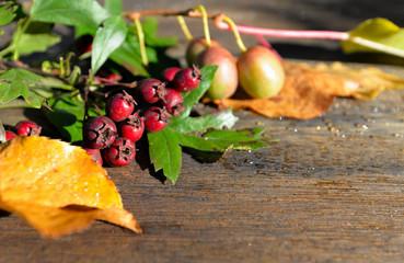 bunte Herbstblätter auf Holzhintergrund