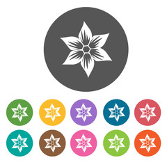Bloomed aster flower icon. Flower icon set. Round  colourful 12
