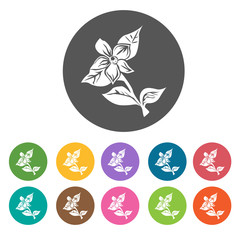 Forget me not flower icon. Flower icon set. Round  colourful 12