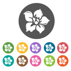 Daffodil icon. Flower icon set. Round  colourful 12 buttons. Vec