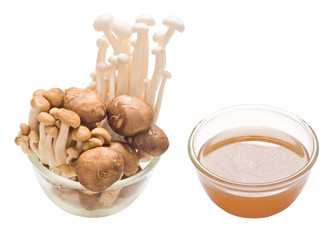 assorted mushroom and stock isolated