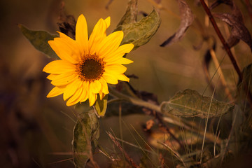 Sunflower Autumn!