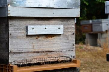 Ruche avec ces abeilles