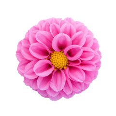 Pink dahlia isolated on white background